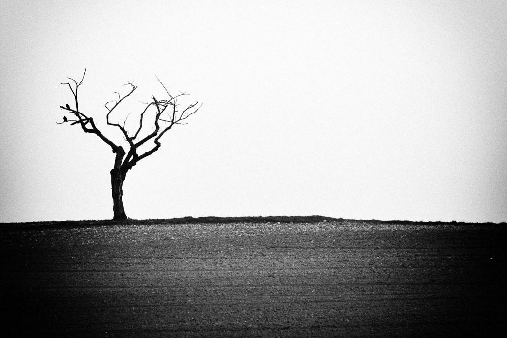 Alter Kirschbaum